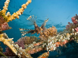 Tauchen mit Werner Lau – Tauchurlaub Bali an der Nord- und Ostküste