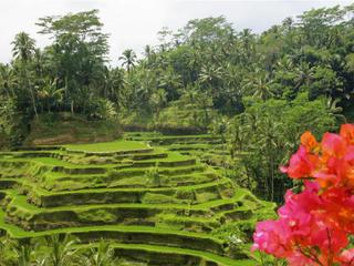 Bali Yoga Wellness Reise – Im Einklang mit Natur, Körper, Geist ...