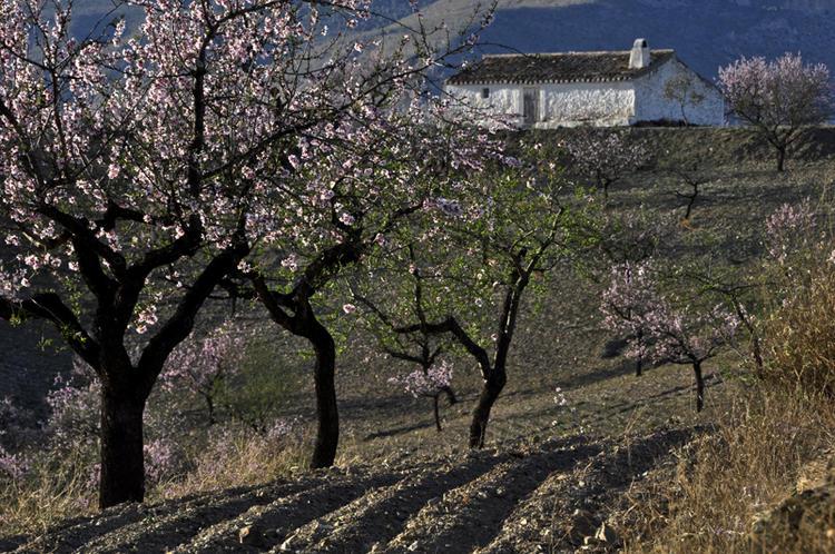 Fotowandern für Frauen | zur Mandelblüte in Andalusien