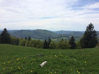 Retreaturlaub auszeit fasten und wandern susanne gottschalk fastenwandern im schwarzwald