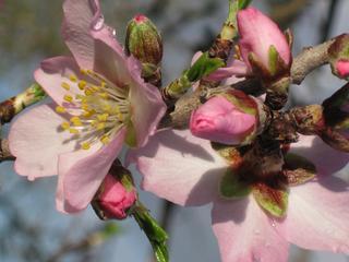 'Wie im Märchen': Yoga-Mandelblütenwoche  im Spa auf der Meeresklippe