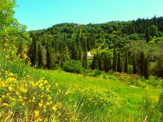 Retreaturlaub dancingtreefarm corfu tree resort 1 woche hatha yoga baum meditation und wellness im corfu tree resort
