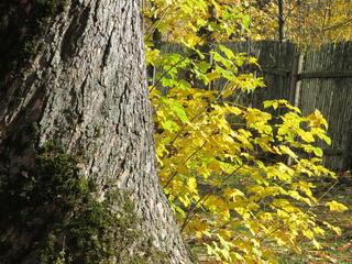 Retreaturlaub naturpark auszeit verein zur foerderung der salutogenese auszeit im garten der sinne