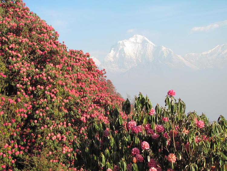 Nepal Trekking: Pokhara & Ghandruk Trek - Entspannung und Entschleunigung rund ums Annapurna Massiv