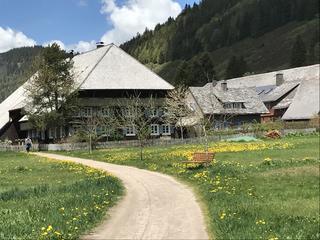 Fastenwandern im Schwarzwald mit Yoga
