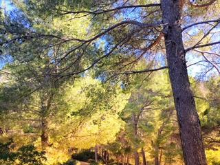 Retreaturlaub holistic empowerment innere ruhe und gelassenheit 6 tage mindfulness retreat auf mallorca