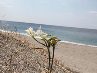 Inselmelodie – Singen und Meer auf Kreta