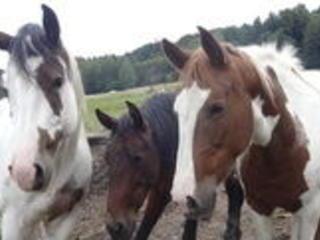 Reiten & Meditation / Erkenne dich selbst und werde eins mit deinem Pferd und der Natur