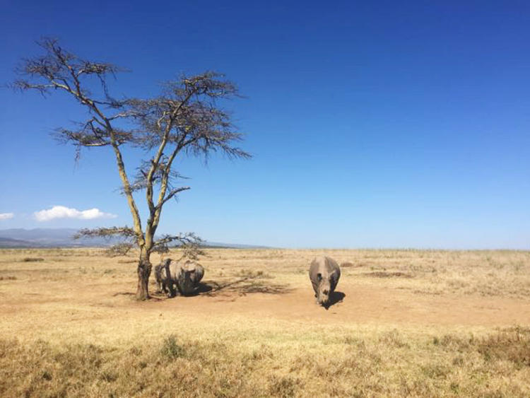 7 Tage Slow Down in Kenia: Gelassenheit durch Resilienz