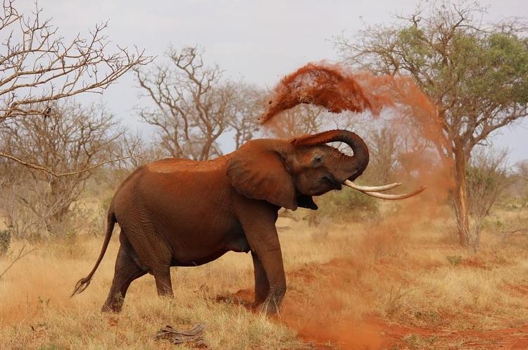 Südafrika Safari Retreat