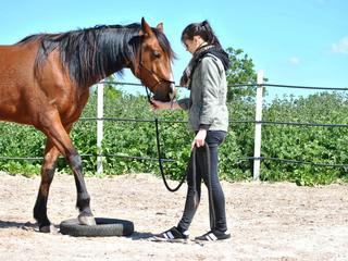 Retreaturlaub finca hotel c an bota frauenreise 2019 6 tage genussreise pferdegestuetztes coaching auf mallorca