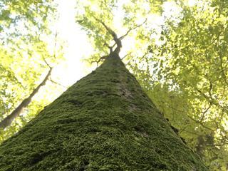 Retreaturlaub geistigfrei mentaltraining natur coaching zeit fuer mich bewegt in der natur baden 3 tage wochenend auszeit im herzen des odenwaldes