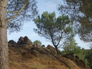 Retreaturlaub inselzeitreisen bretagne waldfee im verzauberten sagenwald von broceliande 7 tage