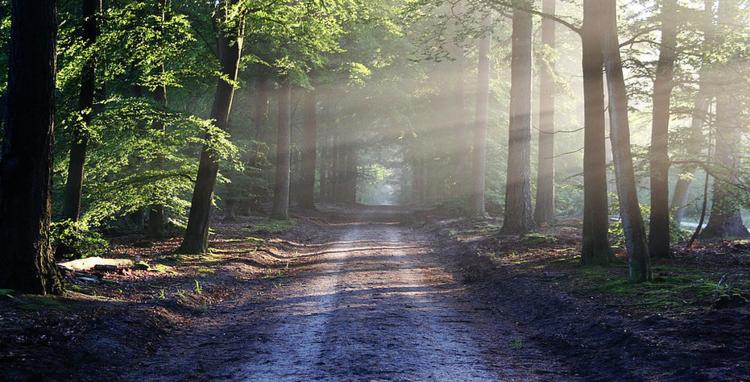 2 Tage Achtsamkeit leben & erleben im Habichtswald (inkl. Verpflegung / Unterkunft)