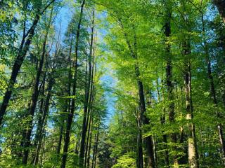 Retreaturlaub treeyourmind a4b732f7 ef0e 4938 928f 33ff2f219351 2 tage achtsamkeit leben erleben im habichtswald
