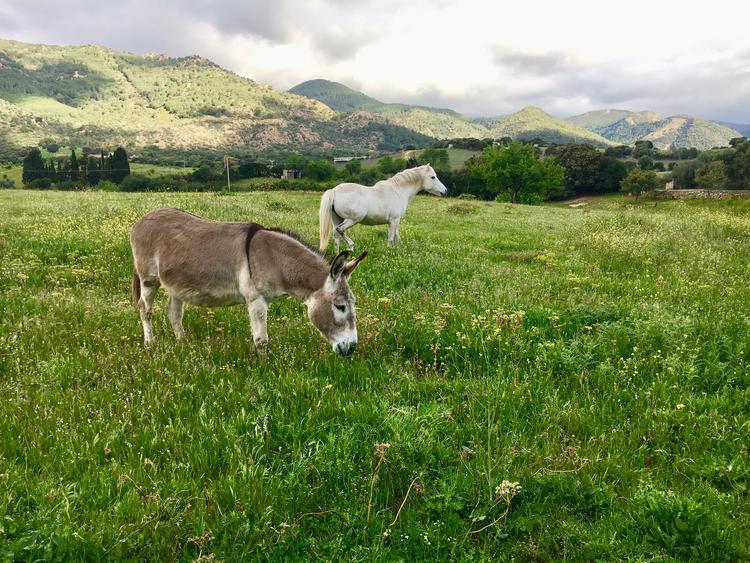 Sardinien Retreat - Kreiere Dir Deine Welt, wie sie Dir gefällt