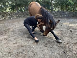 """3 Tage Tanzen mit Pferden """"Fühle dich wohl in der Bewegung und teile dieses Gefühl mit dem Pferd"""""""