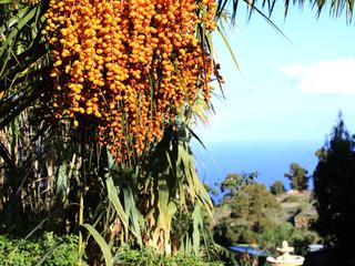 Energetic Yoga auf La Palma (auch für Anfänger, Begleitpersonen willkommen)