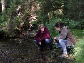 Klarheit erhalten & die Seele reinigen - individuelles Natur Coaching im Hochschwarzwald