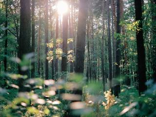 Auf dem Weg ins Neue - Coaching Retreat inkl. Yoga, Meditation und Naturzeit