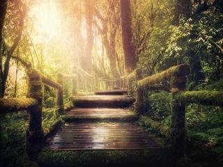 7 Tage Intensiv 1:1 Coaching NATURE - Achtsamkeit, Entspannung und Selbstfindung in der Natur