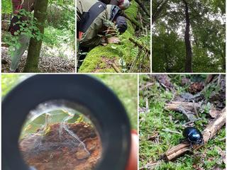 Shinrin Yoku ~ Waldbaden • Entspannungspädagogik in der Natur -  Kursleiter*in