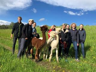 Yoga, Wanderlust und Alpaka-Abenteuer im Mühlviertler Herbst